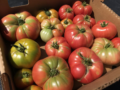 csa-heirloom-tomato-box